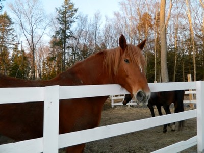 Tek Ailelik Ev for sales at Fifteen Acre Equestrian Property 11 Fox Hollow Ln Newtown, Connecticut 06482 Amerika Birleşik Devletleri