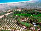 Ferme / Ranch / Plantation for  sales at Rancho Si como No  Todos Santos, Baja California Sur 23300 Mexique