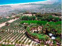 Farm / Ranch / Plantation for sales at Rancho Si como No  Todos Santos, Baja California Sur 23300 Mexico