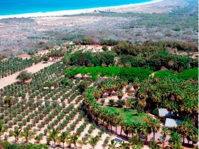 Farm / Ranch / Plantation for sales at Rancho Si como No  Todos Santos, Baja California Sur 23300 Mexico