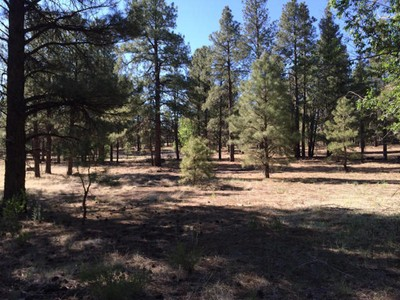 Land for sales at Beautiful Flagstaff Parcel 6794 E Pintail DR  Flagstaff, Arizona 86004 United States