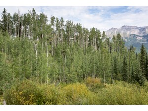 Additional photo for property listing at Lot 240 --- Hang Glider Drive Mountain Village Telluride, Colorado 81435 United States