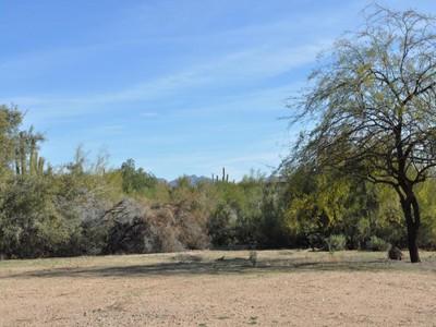 Đất đai for sales at Lush, Level, and Ready Land 7035 E Montgomery RD E 0 Scottsdale, Arizona 85266 Hoa Kỳ