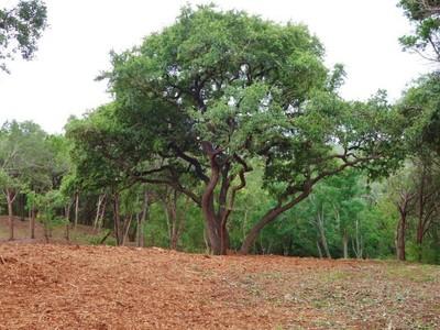 Đất đai for sales at Land in Stratford Hills 100 Birnam Wood Ct Austin, Texas 78746 Hoa Kỳ