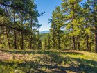 Land for sales at TBD S. Elk Creek Rd  Pine, Colorado 80470 United States