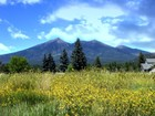 Land for sales at Great Views and Great Financing! 2825 N Gregg DR Flagstaff, Arizona 86001 United States