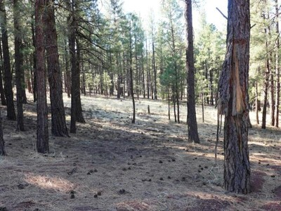 Land for sales at One Acre of Old Growth Pine Trees 7428 E Long Bow DR Williams, Arizona 86046 United States