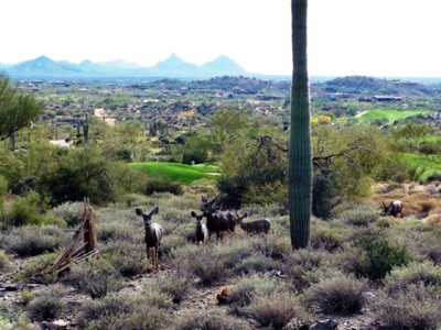 Land for sales at Beautiful Golf Course View Lot in Desert Mountain 9975 E Chiricahua Pass #40 Scottsdale, Arizona 85262 United States