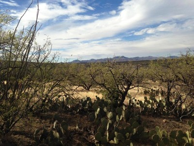 Terreno for sales at Stunning Homesites Located Near the end of the Line on Golder Ranch 5190 E Golder Ranch Dr #2 Tucson, Arizona 85739 Estados Unidos
