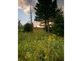 Property Of Antler Ridge View Homesite