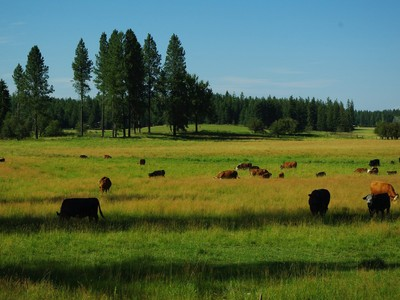 Ferme / Ranch / Plantation for sales at Rare 121 Acre Estate 3222 S. Sagle Rd Sagle, Idaho 83860 États-Unis