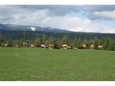 Land for sales at Bane Creek Ranch.....A Legacy Property NNA 450 Acres Bane Creek Ranch Bonners Ferry, Idaho 83805 Vereinigte Staaten