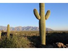 土地 for  sales at Spectacular Saguaro Ranch Home Site With Endless Views 13672 N Old Ranch House Road #1   Marana, アリゾナ 85658 アメリカ合衆国