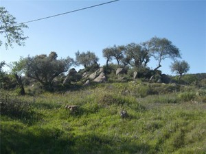 Additional photo for property listing at Farm, 4 bedrooms, for Sale Other Portugal, Other Areas In Portugal Portugal