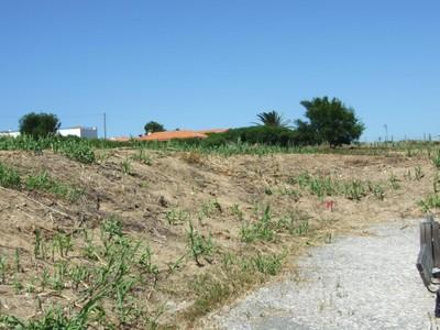Terrain for sales at Real estate land for Sale Colares, Sintra, Lisbonne Portugal