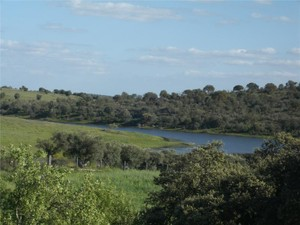 Farm / Ranch / Plantation for Sales at Farm, 4 bedrooms, for Sale Other Portugal, Other Areas In Portugal Portugal