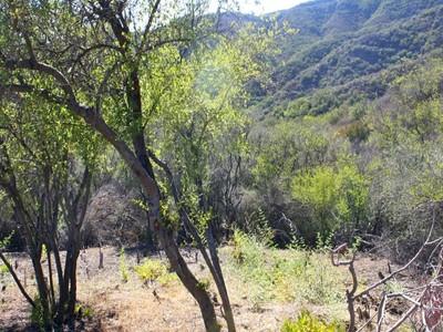 Land for sales at Great Parcel with Canyon Views 0 Latigo Canyon  Malibu, California 90265 United States