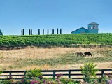 Single Family Home for sales at Anselmo Vineyards 28740 Inwood Road Shingletown, California 96088 United States