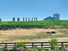 Moradia for  sales at Anselmo Vineyards 28740 Inwood Road Shingletown, Califórnia 96088 Estados Unidos