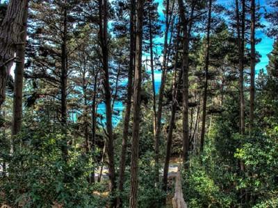 """土地,用地 for sales at Coastal """"Timber Cove"""" Gem 22070 Lee Drive  Jenner, 加利福尼亚州 95450 美国"""