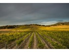 Terrain for  sales at World Class Napa Valley Winery for Sale 40 - 70 Rapp Lane 30 - 40 Lupine Hill Napa, Californie 94558 États-Unis
