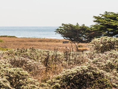 土地,用地 for sales at The Sea Ranch 291 Buckeye The Sea Ranch, 加利福尼亚州 95497 美国