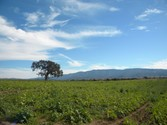Farm / Ranch / Plantation for sales at Spectacular approx. 20 acres  Santa Ynez,  93460 United States