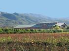 Ferme / Ranch / Plantation for  sales at Carpinteria Farm 5300 Foothill Road Carpinteria, Californie 93013 États-Unis