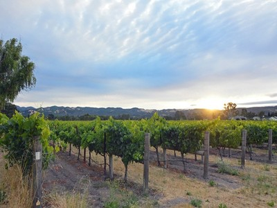 Terreno for sales at Eastside Estate Site and Vineyard 616 Napa Road Sonoma, California 95476 Stati Uniti