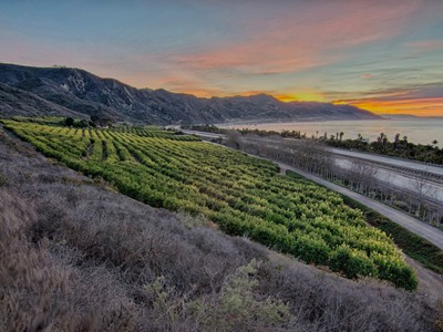 農場 / 牧場 / 種植場 for sales at Faria Coastal Ranch 3945 Pacific Coast Highway Ventura, California 93002 United States