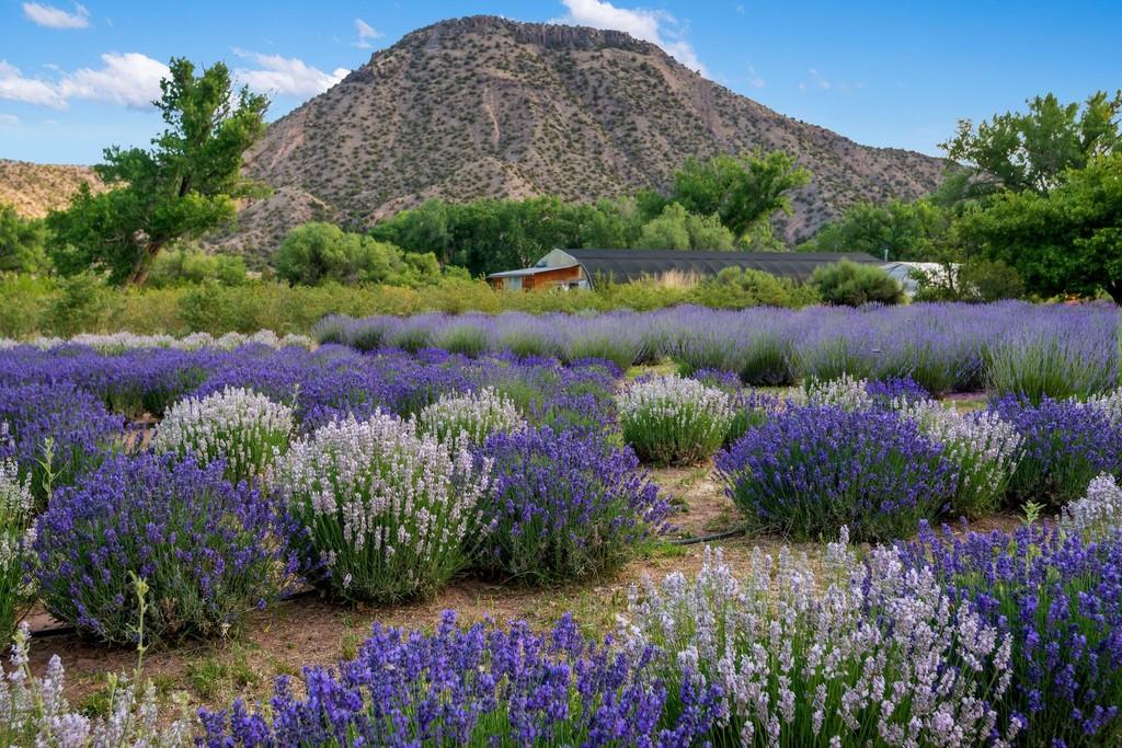 Purple Adobe Lavender Farm Abiquiu New Mexico 87510 multi-family homes for  Sale