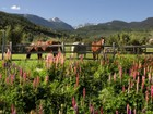 Ferme / Ranch / Plantation for  sales at 1705 Lake Creek Road  Edwards, Colorado 81632 États-Unis