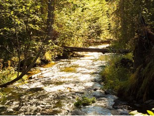 Land for sales at Three Forks of Lazy Creek Lupfer Road Whitefish, Montana 59937 United States