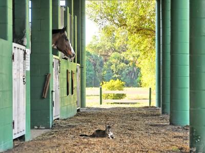 Farm / Ranch / Plantation for sales at VENICE FARM ACRES 3431  Border Rd Venice, Florida 34292 United States