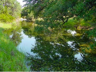 Farm / Ranch / Plantation for sales at 431± Acre Shut-In Creek Ranch 0 HWY 83 Concan, Texas 78838 United States