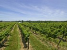 Vigneto for sales at Palmer Vineyards 2 34995 Main Rd Cutchogue, New York 11935 Stati Uniti