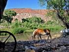 Ferme / Ranch / Plantation for  sales at Historic Perkins Ranch 0 Perkinsville Ranch Rd  Prescott, Arizona 86301 États-Unis