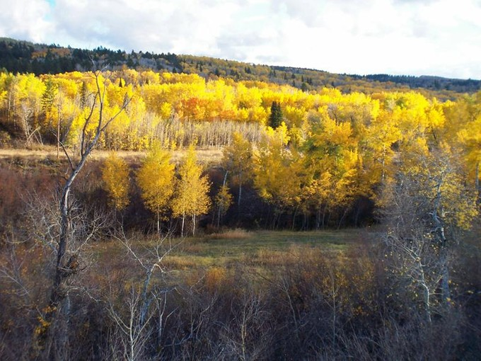 Land for sales at 2.5 + Acre Sites - Fox Creek Canyon 166 Balsam Ln   Victor, Idaho 83455 Vereinigte Staaten