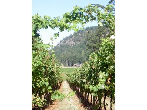 Additional photo for property listing at Saturna Family Estate Winery 32 Trueworthy Road  Saturna Island, Colombie-Britannique V0N 2Y0 Canada