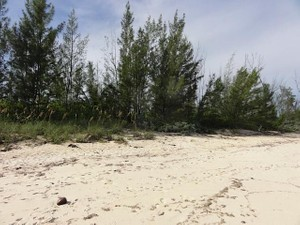 Additional photo for property listing at Palm Shores Lot 27 with Cottage Palm Shores Love Beach Love Beach, Nassau And Paradise Island . Bahamas