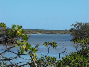 Terreno for sales at Cedar Harbour  Other Abaco, Abaco . Bahamas