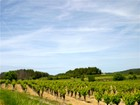 Farm / Ranch / Plantation for  sales at Eunotouristique property in Herault  Narbonne, 랑그도크루시용주 11000 프랑스