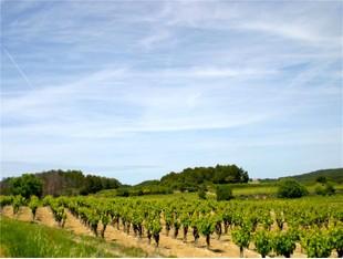 Landgut / Bauernhof / Plantage for sales at Eunotouristique property in Herault  Narbonne, Languedoc-Roussillon 11000 Frankreich