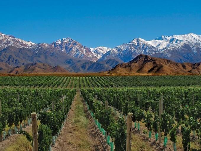 Vinhedo for sales at Casa de Uco Vineyard & Wine Hotel Uco Valley Other Mendoza, Mendoza - Argentina