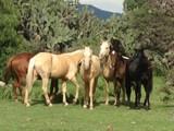 Property Of Rancho Corral de Piedras
