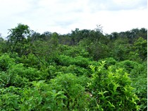 Land for sales at GREAT DEVELOPMENT PARCEL  Cancun, Quintana Roo 77540 Mexico