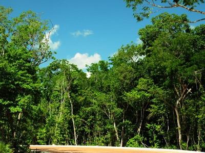 Land for sales at ALDEA ZAMÁ  Tulum, Quintana Roo 77780 Mexico