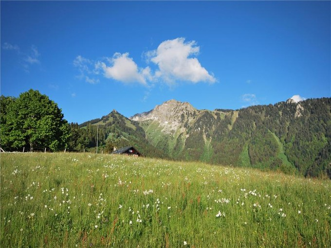 土地 for sales at Exceptional plot of 13,758 m2 with 360° views  Montreux, ボー 1824 スイス