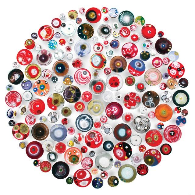 Klari Reis' work includes hand-painted petri dishes